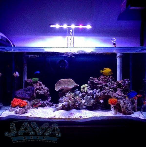 jasa perawatan bulanan aquarium air laut untuk rumah, restora, cafe, dan masih banyak lagi.