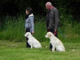 Obéissance | Club Canin de l'Iroise