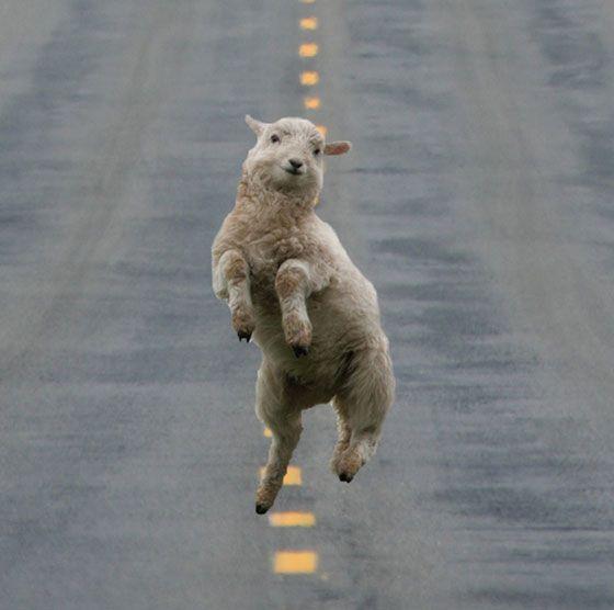 Nachdem wir in der vergangenen Woche schon lustige SMS-Konversationen mit einem Hund gepostet haben, möchten wir Euch heute ein paar Fotos von glücklichen Tieren zeigen.    Also meine Laune wurde durch die folgenden Bilder deutlich gesteigert. Wir würd