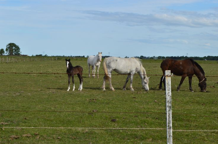 Horses on the Pampas. Grill party in Pampas. Horse riding on Pampas. Argentina Wonders.