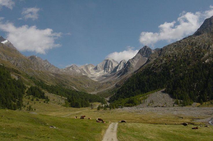 Wunderschöne Südtiroler Almwiesen