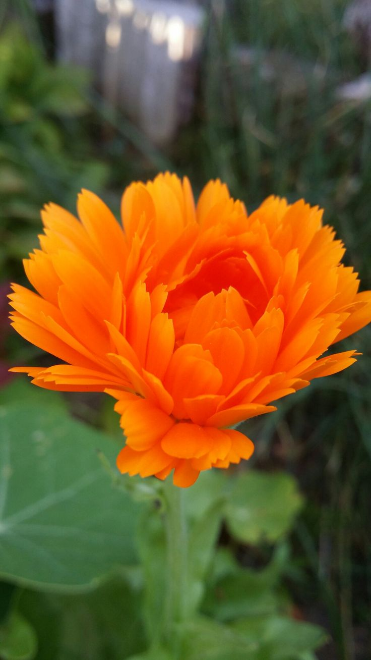 The Marigold Tarot Major Arcana The: 35 Best Images About Marigold