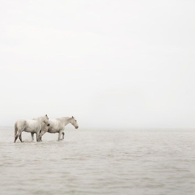 "Minimalist White Horse Photography, Horse Art, Peaceful Art, Modern Bedroom Decor, Nature Photography Print, ""Far Away So Close"" by EyePoetryPhotography on Etsy https://www.etsy.com/listing/78626628/minimalist-white-horse-photography-horse"