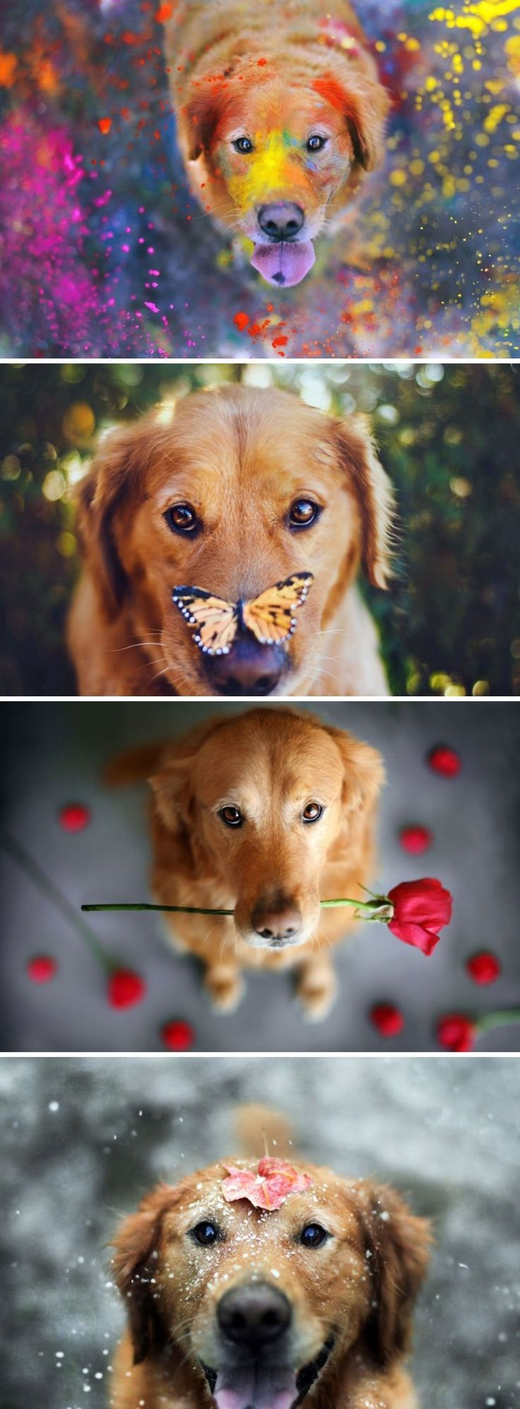 LOVE these!!! Wonderfully Captivating portraits of Pets by Jessica Trinh