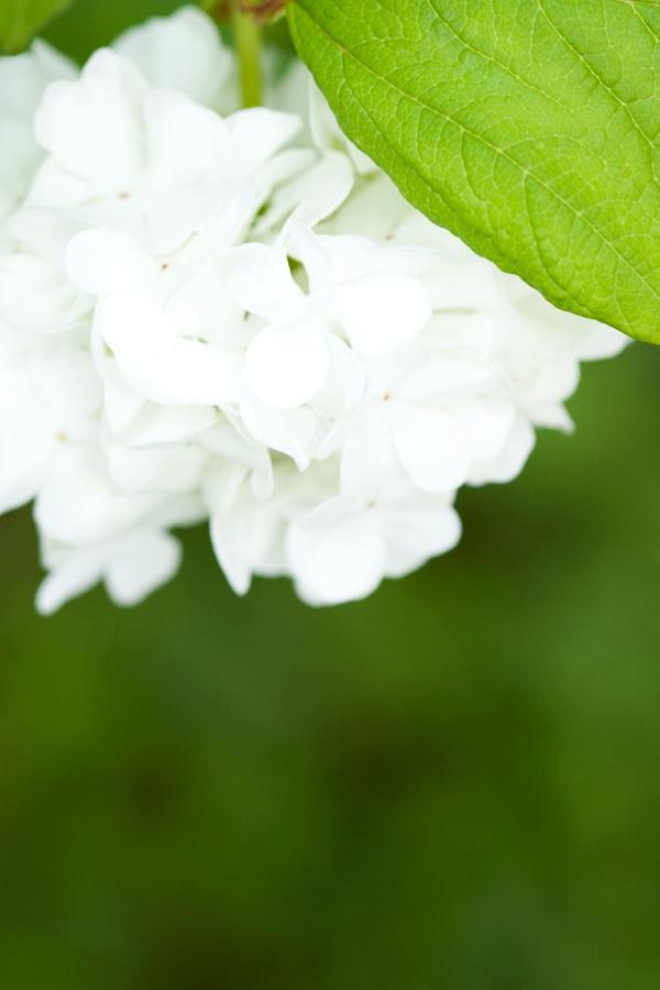Garden, Flower, White, Katrine Anita H. Heggelund