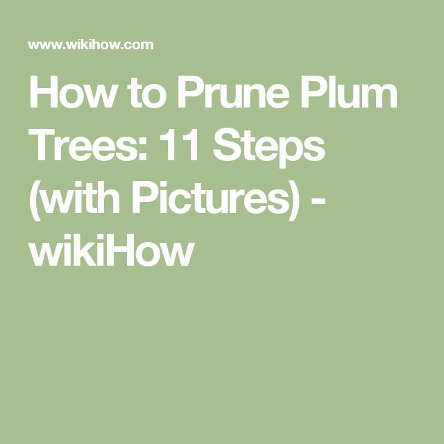 How to Prune Plum Trees: 11 Steps (with Pictures) - wikiHow