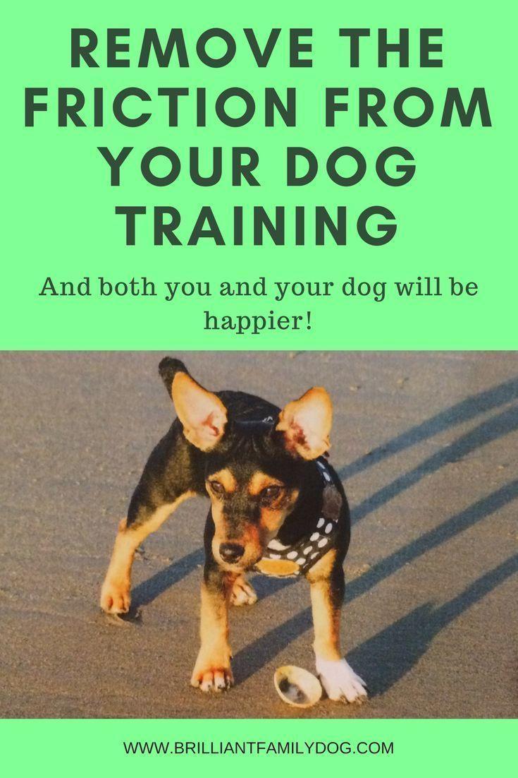 Clicker Dog Training Dog Training New Puppy Puppy Training Dog