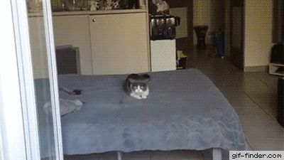 Crazy Caffeined Cat | Gif Finder – Find and Share funny animated gifs