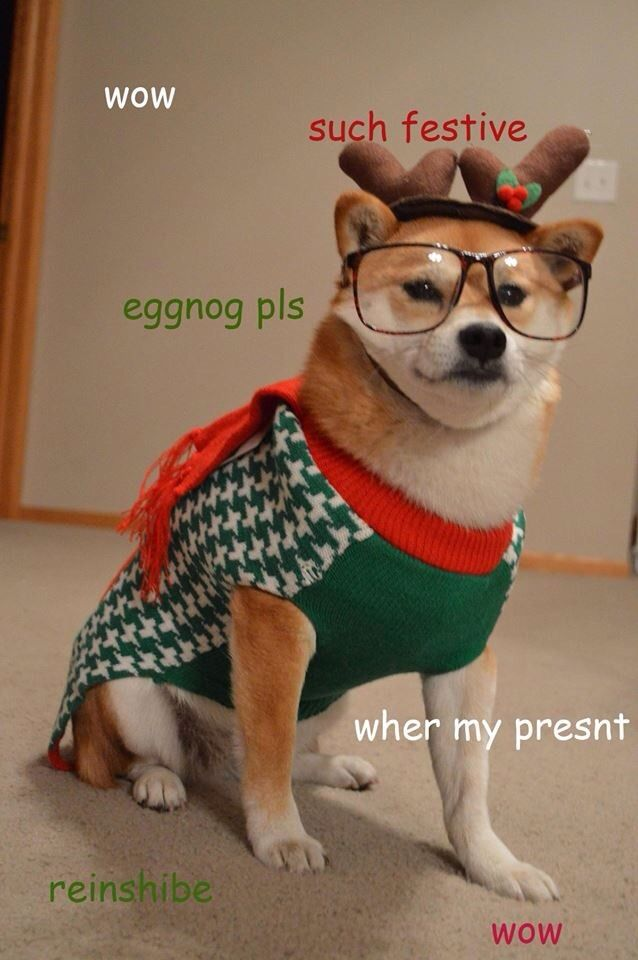 14 Pups In Ugly Holiday Sweaters Who Want To Cancel Christmas
