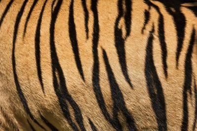 How to Make Tiger Stripe Patterns