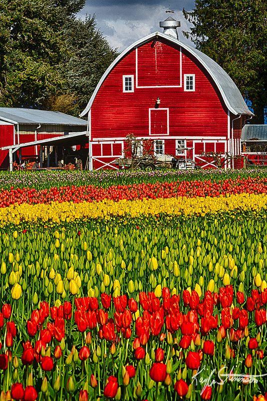 Red Barn Stylized - Skagit Valley Tulip Festival, Washington