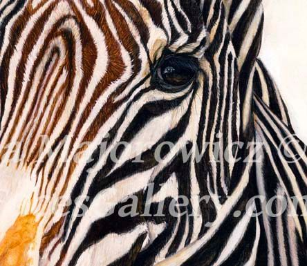 Arte de Zebra Zebra lona impresión cebra por WildFacesGallery
