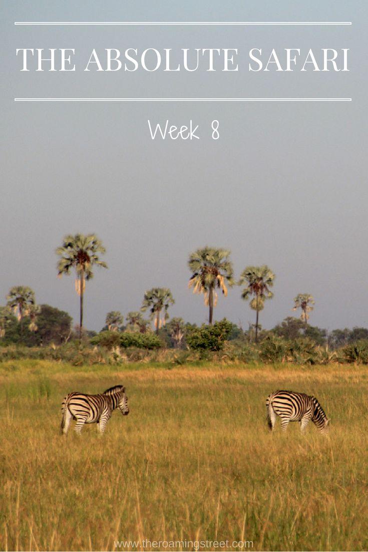 The Absolute Safari Week 8: Botswana - The Roaming Street