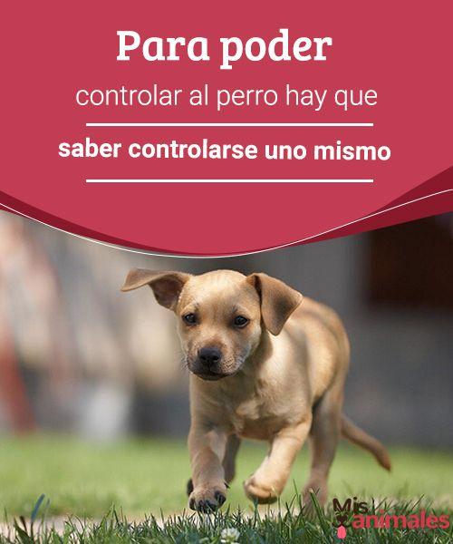Para poder controlar al perro hay que saber controlarse uno mismo  A veces intentamos controlar a nuestro perro sin haber empezado a controlar nuestra ira. Para lograrlo, debemos primero controlar nuestras emociones. #control #perro #amo #adiestramiento