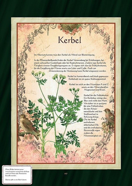 Kerbel - Kerbeltee