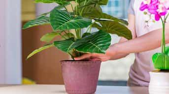 Udržujte izbové rastliny v čistote. Pomôže to ich rastu!