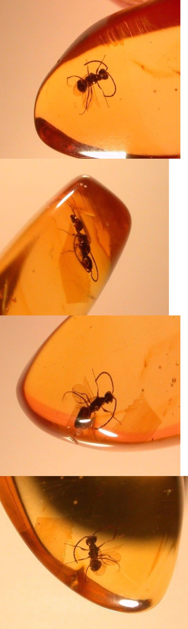 Amber 10191: Beautiful Winged Ant In Burmite Amber From Dinosaur Era 99 Million Years Old -> BUY IT NOW ONLY: $60 on eBay!