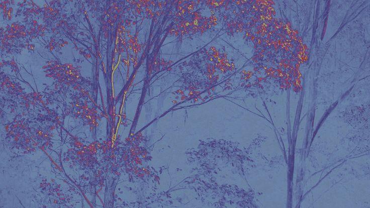 Stringybark Forest by blackbirdart