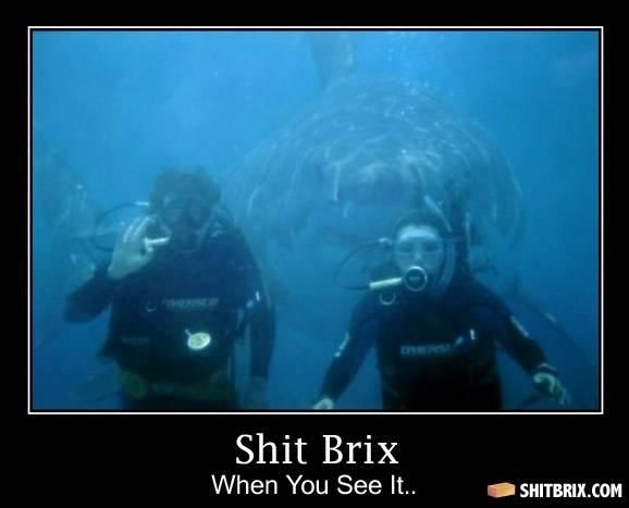- Divers: Photos Bombs, Funny Pictures, The Ocean, Scubas Diving, Crazy Animal, Funny Stuff, Funny Photos, Sharks Week, Funnystuff