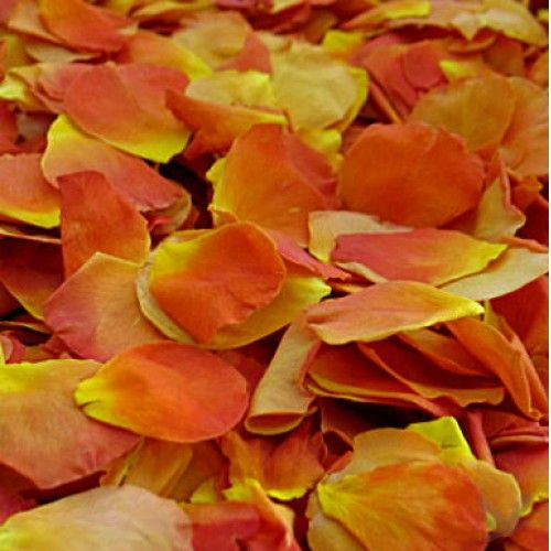 168 best images about the colors of nature on pinterest for Natural rose colors