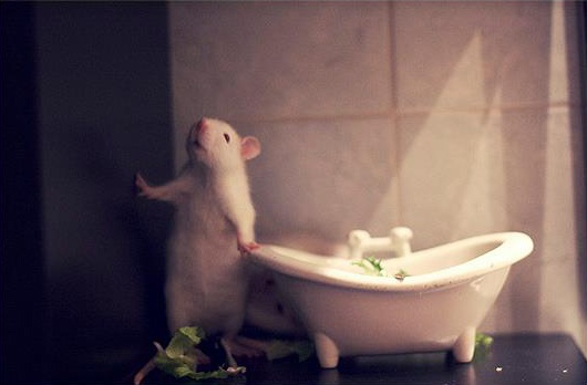 annie rat- bathtub salad