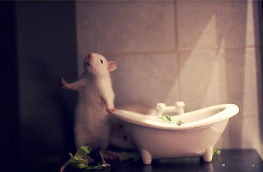 annie rat- bathtub salad