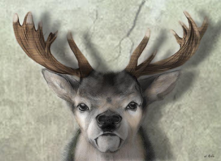 Deer No Hunt