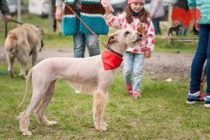 """В Тамбове проведут парад бездомных собак.  Фестиваль по формуле два в одном: конкурс красоты и смотринызапланирован на 2-ое сентября. Это будет шестая выставка для беспородных собак и метисов. А для жителей собачьего приюта - это еще один для кого-то единственный шанс найти хозяина.  """"Мы конечно их любим заботимся но приют - это не дом. Любое упоминание собак приюта для них шанс уехать домой - говорит один из координаторов сообщества помощи бездомным животным """"Доброе сердце"""" Людмила…"""