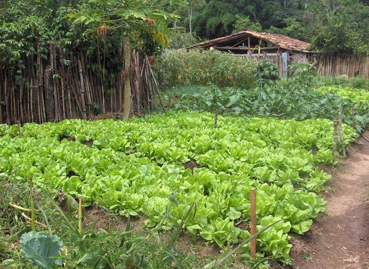 Presidente Bernardes MG!!!,,,gostou da minha horta,??