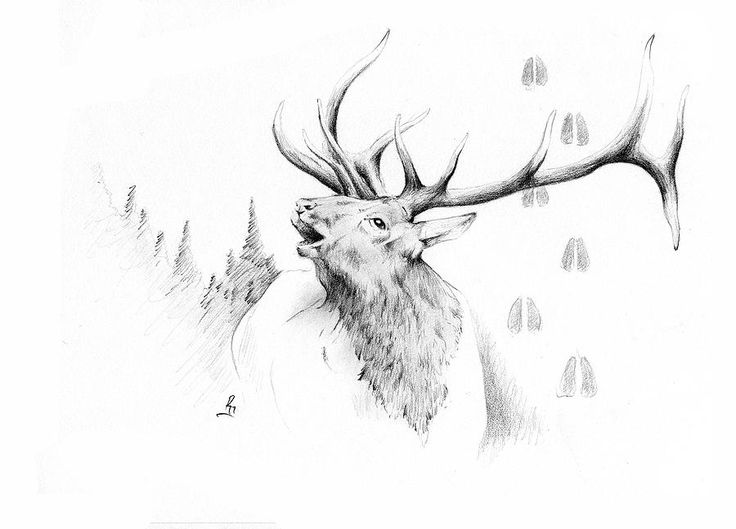 Elk Bugle Drawing  - Elk Bugle Fine Art Print