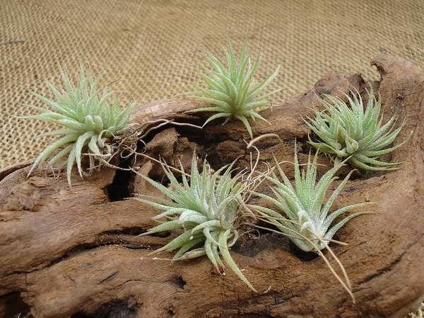 """5 plantas fáceis de cultivar mesmo para quem não tem o """"dedo verde"""""""