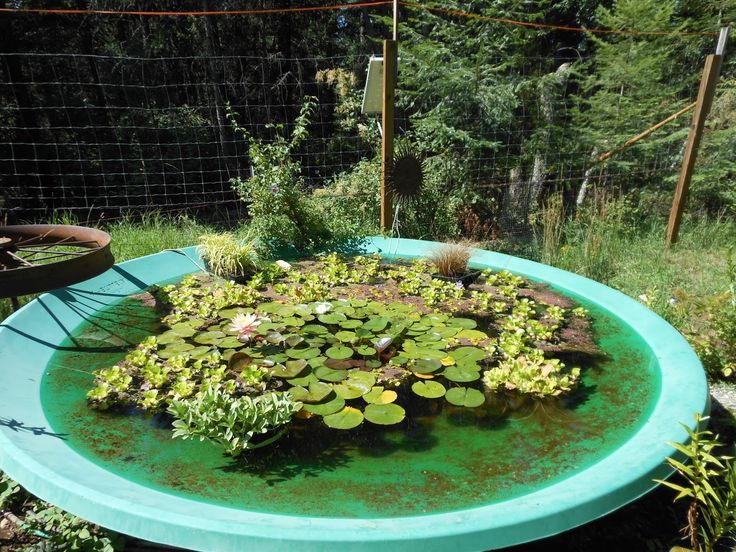 Satellite dish made into a pond