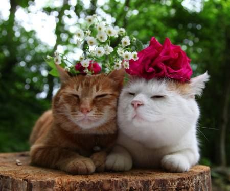 Bloomin' lovelies.