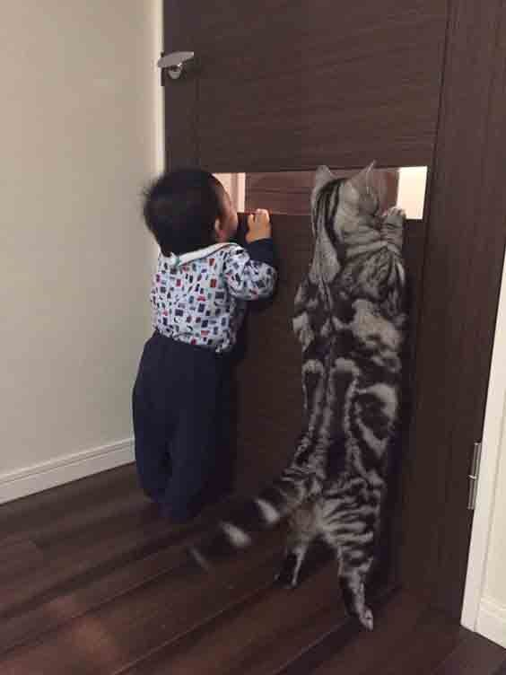 Cat And Boy Peeking