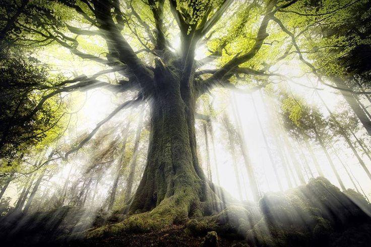 Gli Arcani Supremi (Vox clamantis in deserto - Gothian): Fairytales. Mirkwood