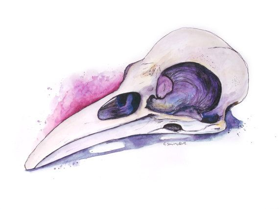 ORIGINAL 'Raven Skull' Watercolour Illustration painting by Guinevere Saunders Artist SIGNED