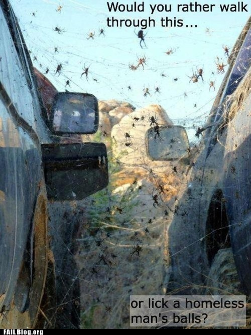 I'd rather walk through this. Worms on the other hand...Abandoned Cars, Ball, God, Spiders, Funny Pictures, Crafts Room, Night Time, No Way, Funny Photos