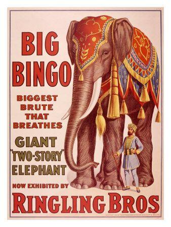 Ringling Brothers Circus: Big Bingo the Elephant