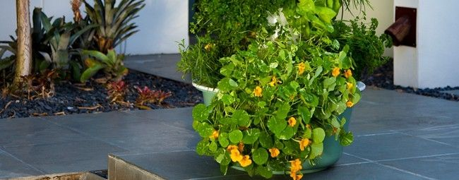 how to build a aeroponic tower garden
