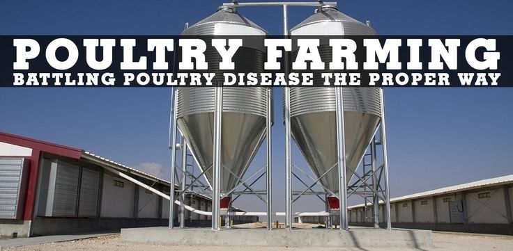 Poultry disease is something those who raise poultry are always weary of and looking to fight off. Check out this article and see what makes our products the most suitable to keep your poultry healthy and thriving.