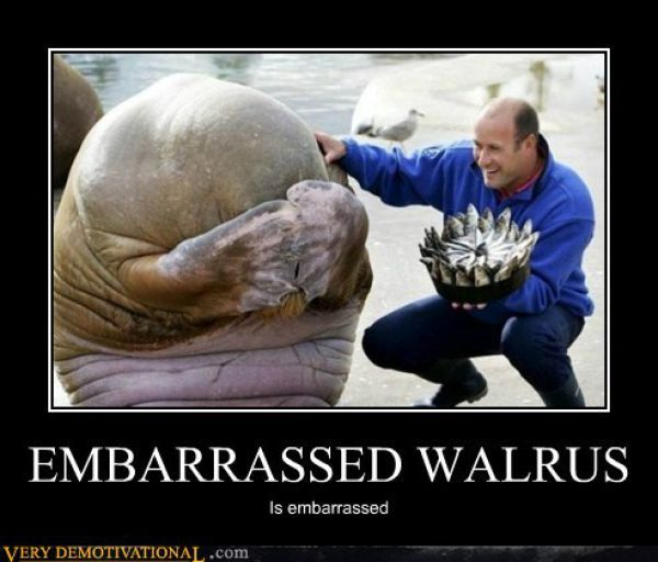 ahhhhhh: Picture, Fish Cake, Animals, Happy Birthday, So Cute, Birthdays, Funny, Walrus S Reaction, Birthday Cakes