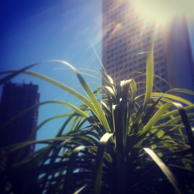Forget you're in the CBD by standing really, really close to this plant on our balcony.