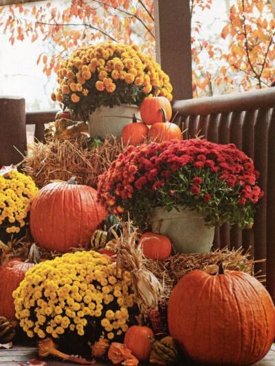Lovely fall vignette with bales of hay, potted mums, pumpkins and gourds