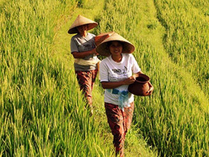 Farming & Trekking - visit http://travellover.club/st_activity/farming-trekking/