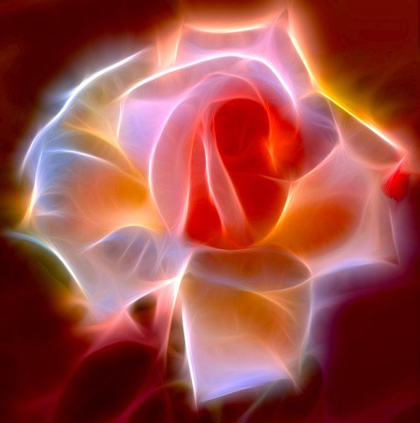 A fractalised rose, gloriously lit up!