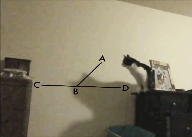 Calculating the perfect jump funny pics, funny gifs, funny videos, funny memes, funny jokes. LOL Pics app is for iOS, Android, iPhone, iPod, iPad, Tablet