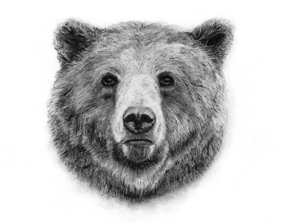 best 25 drawings of bears ideas on pinterest hugging