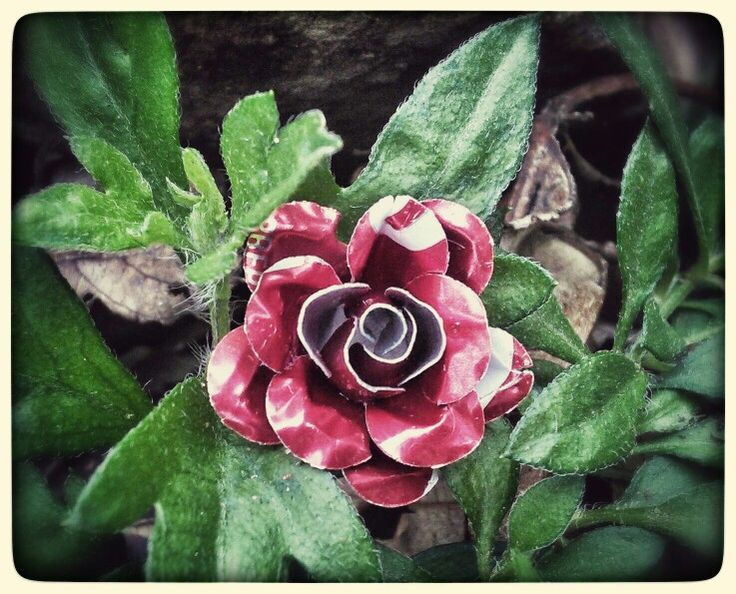 Small rose made from an aluminium coke can