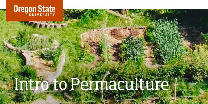 Intro to Permaculture is a free, four-week course provided online by Open Oregon State that teaches the process, ethics and principles of permaculture.
