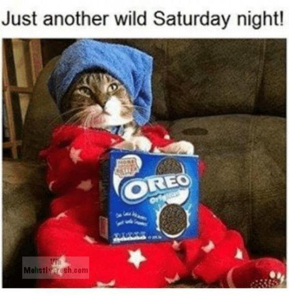 Sad Quotes About Love: Best 25+ Sad Cat Meme Ideas On Pinterest